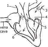 (Biology) ICSE Class X Important Questions : Biology (2001 ...