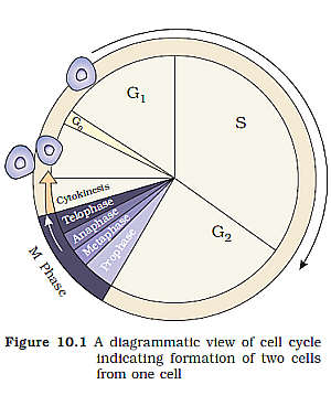 Cbse class 11th biology pdf notes for download pick my coaching.